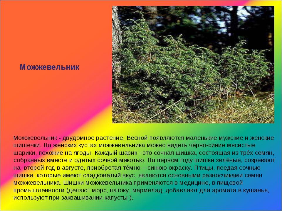 Можжевельник Можжевельник - двудомное растение. Весной появляются маленькие м...