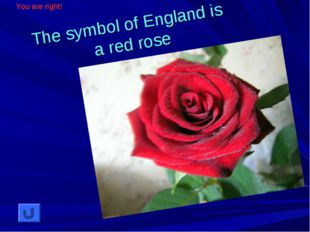 The symbol of England is a red rose You are right!