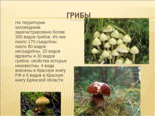 На территории заповедника зарегистрировано более 300 видов грибов. Из них око