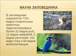 В заповеднике охраняется 71% видов позвоночных животных. Зарегистрировано бол