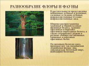 В растительности представлены пойменные дубовые и ясеневые, сосновые и соснов