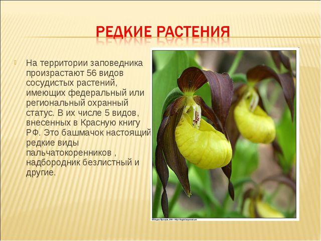 На территории заповедника произрастают 56 видов сосудистых растений, имеющих...