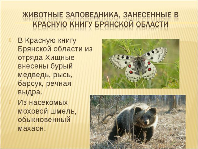 В Красную книгу Брянской области из отряда Хищные внесены бурый медведь, рысь...
