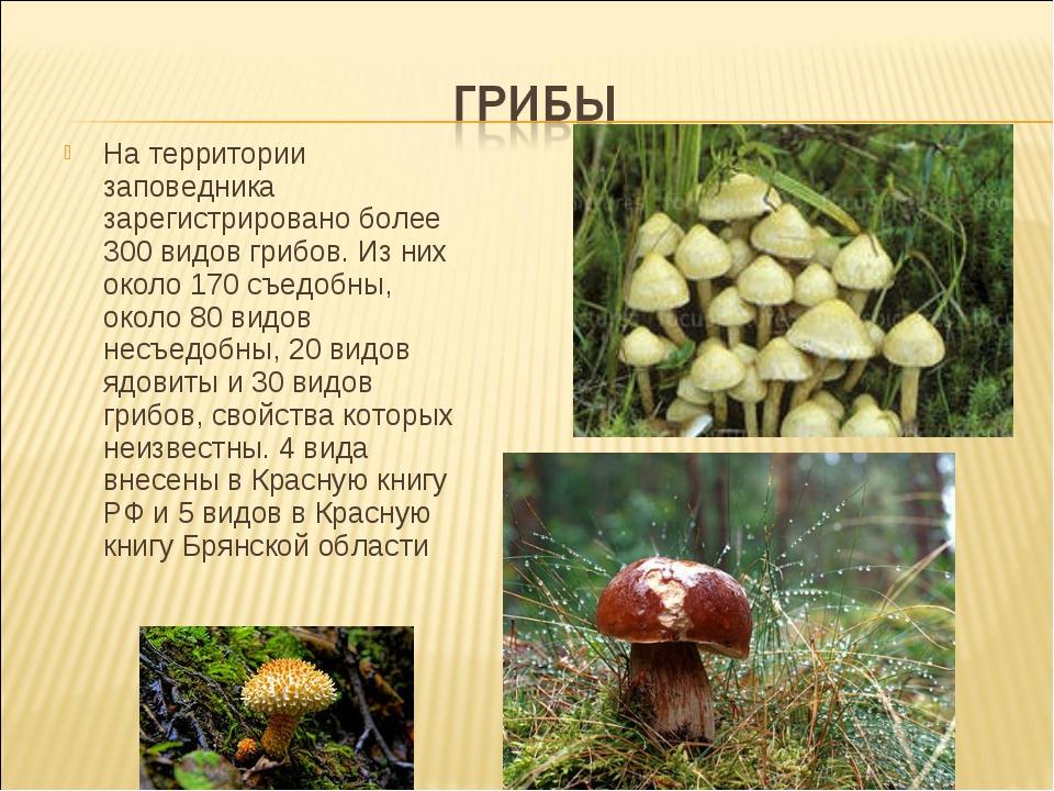 На территории заповедника зарегистрировано более 300 видов грибов. Из них око...