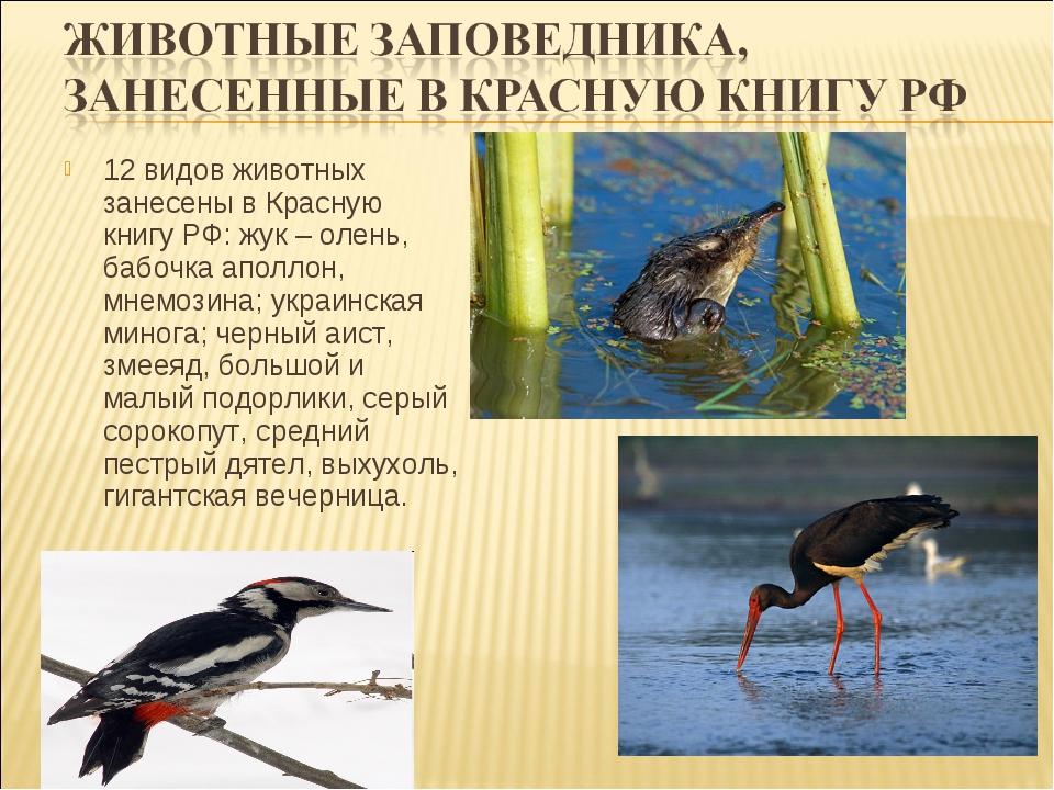 12 видов животных занесены в Красную книгу РФ: жук – олень, бабочка аполлон,...
