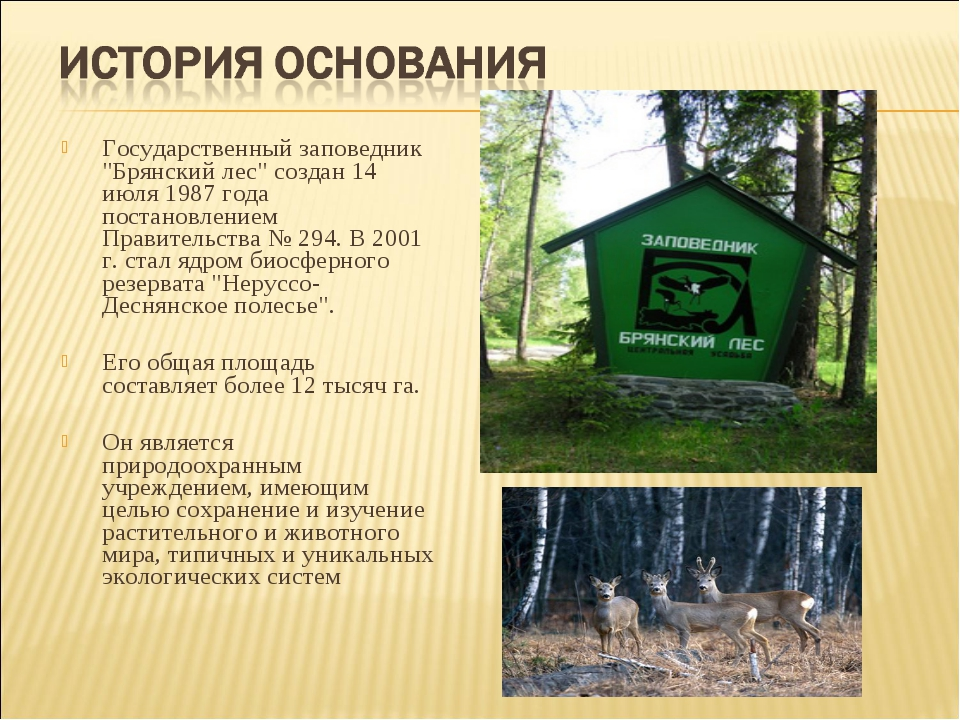 """Государственный заповедник """"Брянский лес"""" создан 14 июля 1987 года постановл..."""