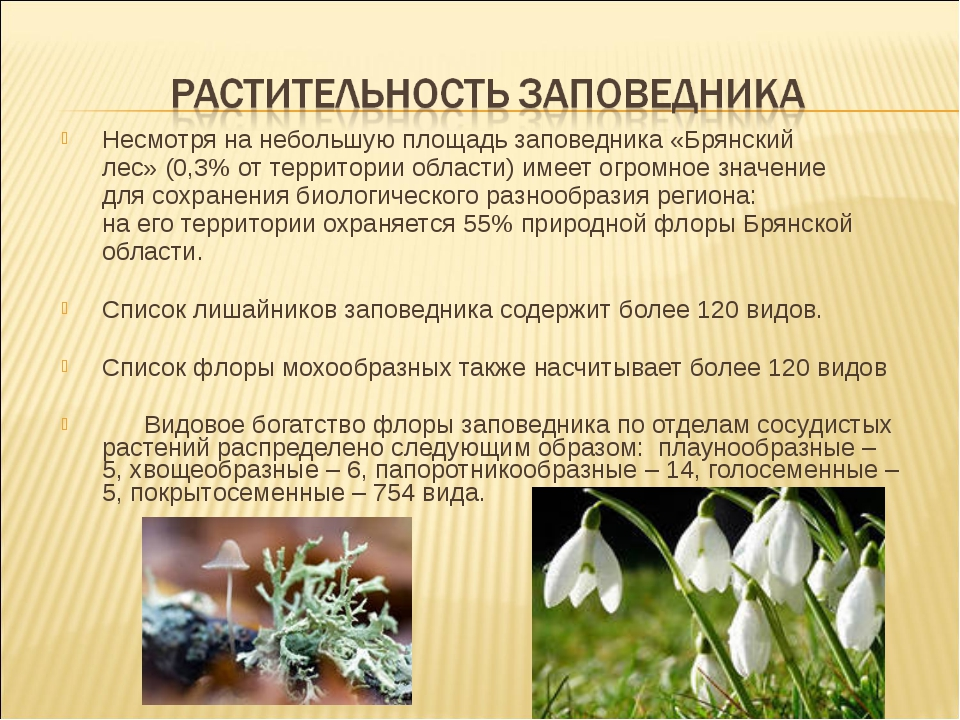 Несмотря нанебольшую площадь заповедника «Брянский лес»(0,3% оттерритории...