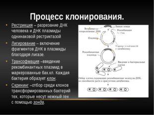 Рестрикция – разрезание ДНК человека и ДНК плазмиды однинаковой рестриктазой
