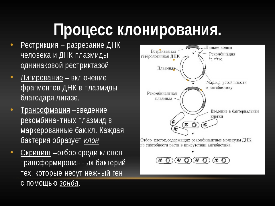 Рестрикция – разрезание ДНК человека и ДНК плазмиды однинаковой рестриктазой...