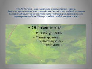 ТИХАЯ СОСНА – река, записанная в книгу рекордов Гиннеса. Даже если взять пол