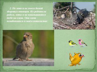 2. Не лови и не уноси домой здоровых птенцов. Их родители рядом, хотя и не п