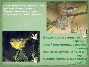 К тому же и пользу приносят они Едят они гусениц разных. Спасают они и леса,