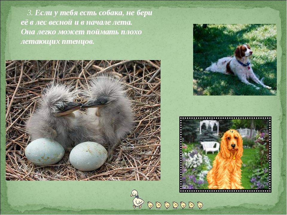 3. Если у тебя есть собака, не бери её в лес весной и в начале лета. Она лег...