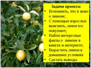 Задачи проекта: Вспомнить, что я знаю о лимоне; С помощью взрослых выяснить,