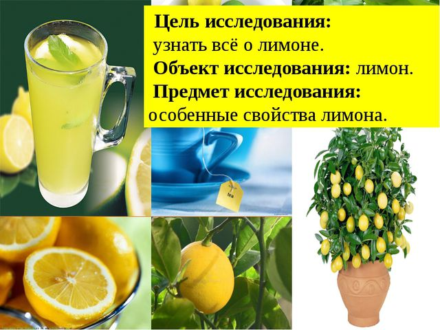 Цель исследования: узнать всё о лимоне. Объект исследования: лимон. Предмет...