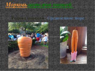 Родина моркови- Средиземное море Морковь-королева овощей
