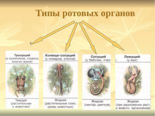 Типы ротовых органов