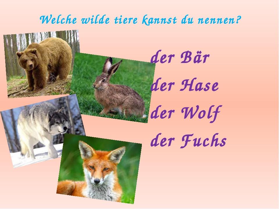 Welche wilde tiere kannst du nennen? der Bär der Hase der Wolf der Fuchs
