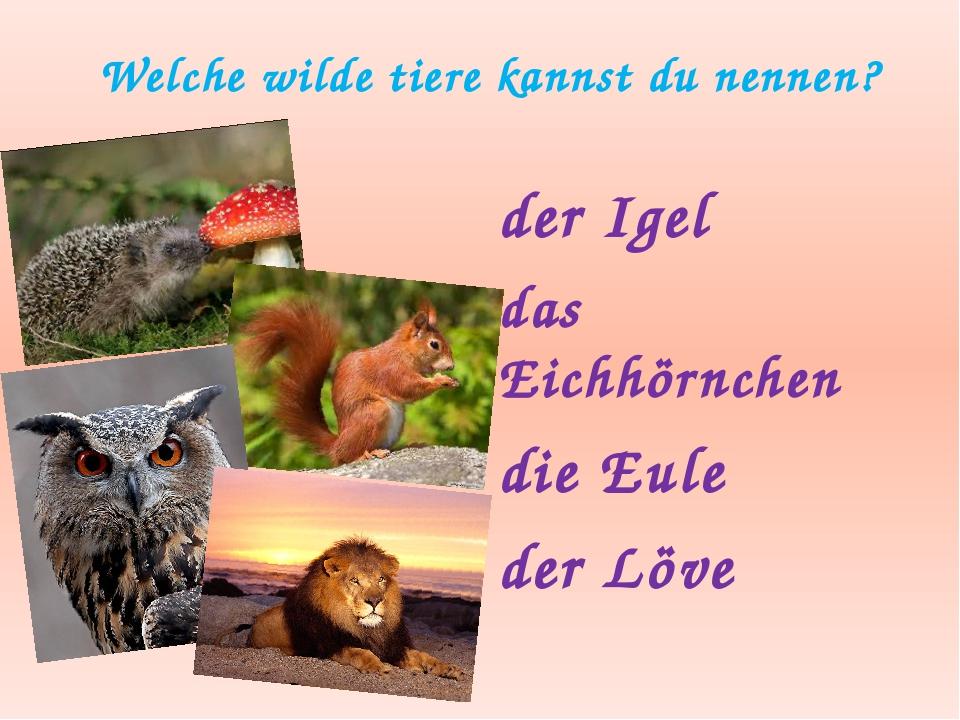 Welche wilde tiere kannst du nennen? der Igel das Eichhӧrnchen die Eule der L...