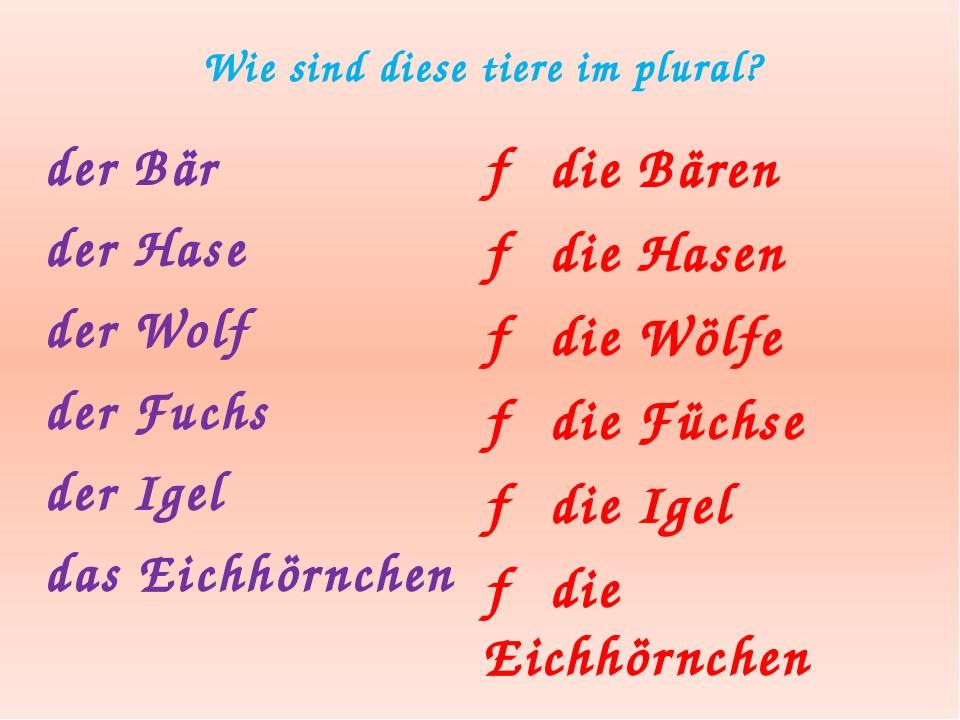Wie sind diese tiere im plural? der Bär der Hase der Wolf der Fuchs der Igel...