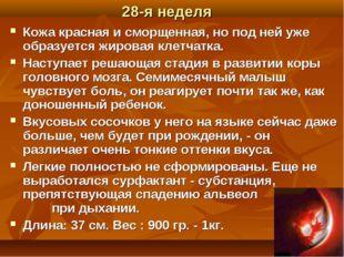 28-я неделя Кожа красная и сморщенная, но под ней уже образуется жировая клет