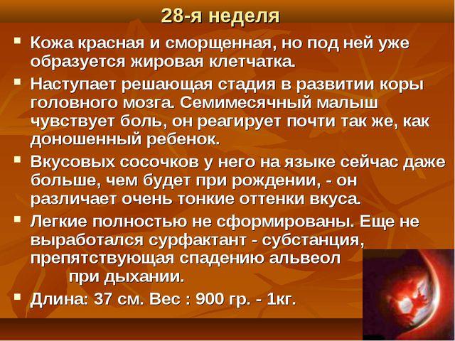 28-я неделя Кожа красная и сморщенная, но под ней уже образуется жировая клет...