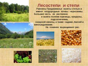 Лесостепи и степи Равнины Предкавказье заняты степью и имеют плодородные поч