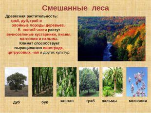 Смешанные леса Древесная растительность: граб, дуб, граб и хвойные породы дер