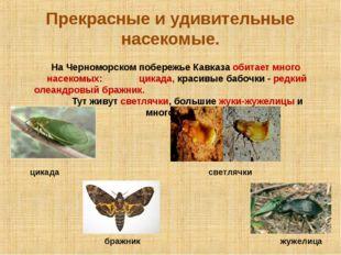 Прекрасные и удивительные насекомые. На Черноморском побережье Кавказа обитае