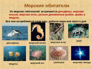 Морские обитатели Из морских обитателей встречаются дельфины, морские коньки