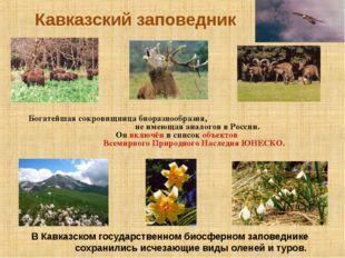 Кавказский заповедник В Кавказском государственном биосферном заповеднике сох