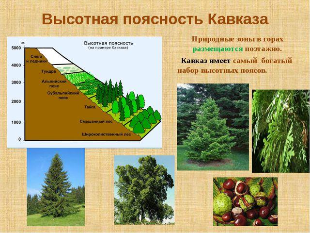 Высотная поясность Кавказа Природные зоны в горах размещаются поэтажно. Кавка...