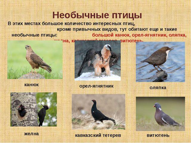 Необычные птицы В этих местах большое количество интересных птиц, кроме привы...