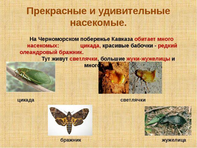 Прекрасные и удивительные насекомые. На Черноморском побережье Кавказа обитае...