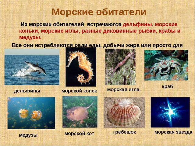 Морские обитатели Из морских обитателей встречаются дельфины, морские коньки...
