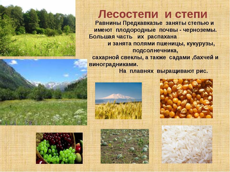 Лесостепи и степи Равнины Предкавказье заняты степью и имеют плодородные поч...