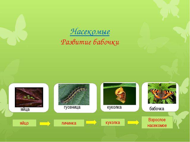 Насекомые Развитие бабочки гугу гусеница яя яйца куколка бабочка яйцо личинк...