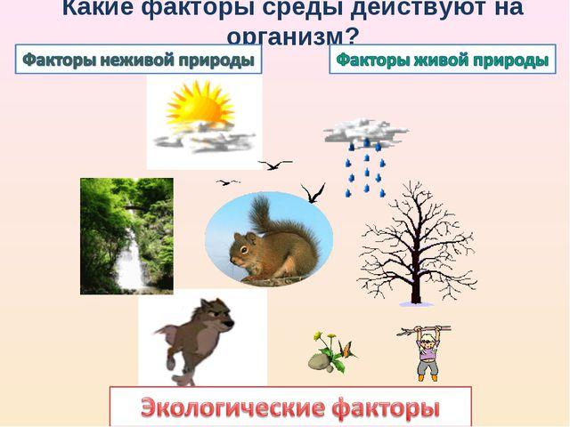 Какие факторы среды действуют на организм?