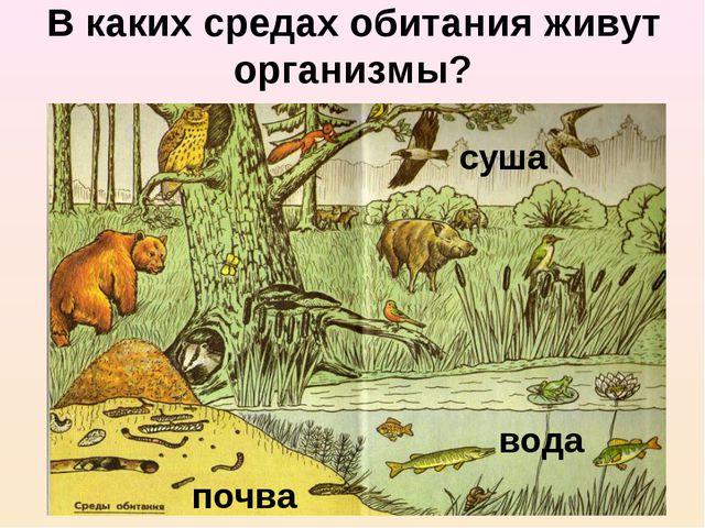 В каких средах обитания живут организмы? суша вода почва