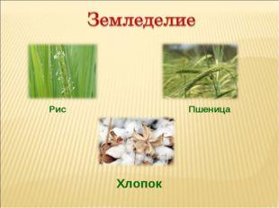 Рис Пшеница Хлопок