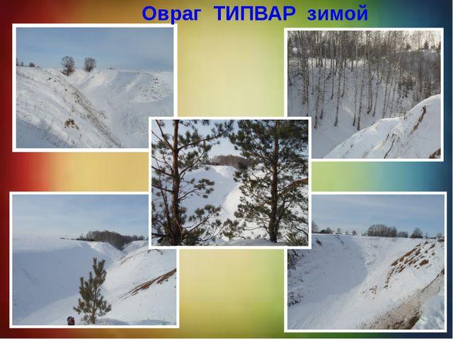 Овраг ТИПВАР зимой Овраг ТИПВАР зимой