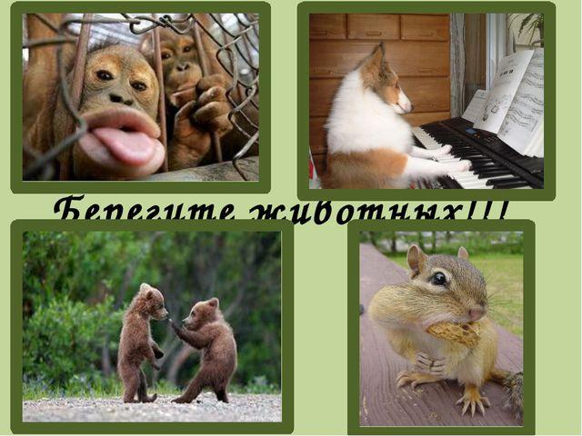 Берегите животных!!!