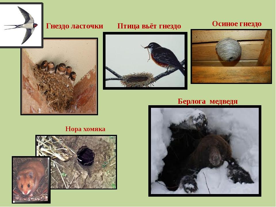 Гнездо ласточки Осиное гнездо Нора хомяка Берлога медведя Птица вьёт гнездо