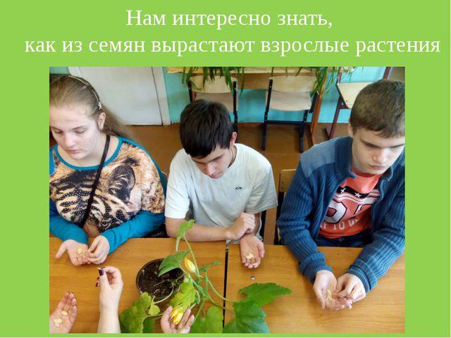 Нам интересно знать, как из семян вырастают взрослые растения