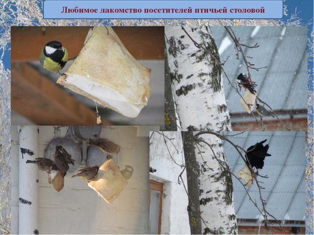 """ПАМЯТКА """"КАК КОРМИТЬ ПТИЦ"""" Любимое лакомство посетителей птичьей столовой"""