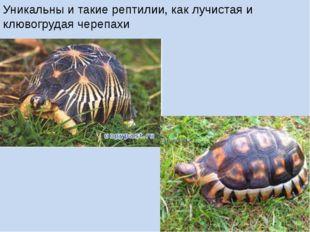 Уникальны и такие рептилии, как лучистая и клювогрудая черепахи