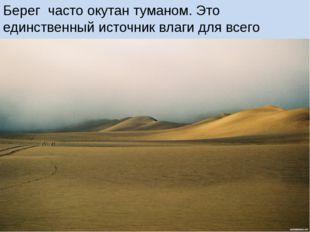 Берег часто окутан туманом. Это единственный источник влаги для всего живого.