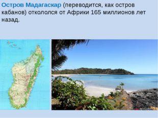 Остров Мадагаскар (переводится, как остров кабанов) откололся от Африки 165 м