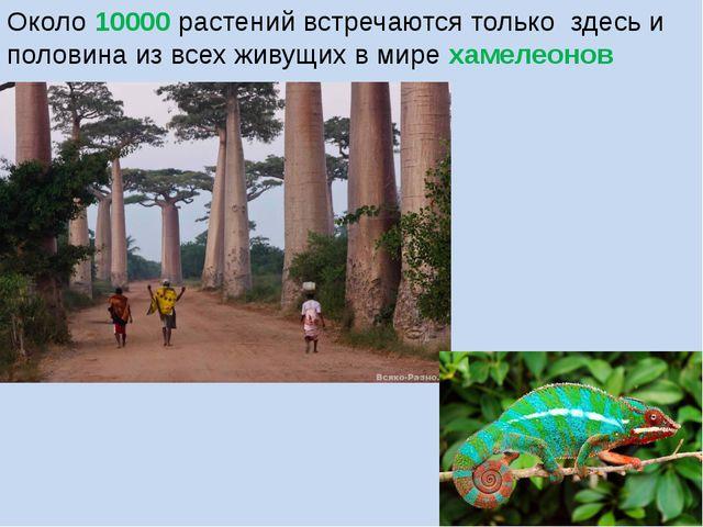 Около 10000 растений встречаются только здесь и половина из всех живущих в ми...