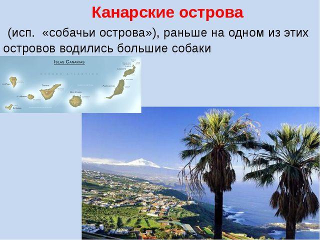 Канарские острова (исп. «собачьи острова»), раньше на одном из этих островов...